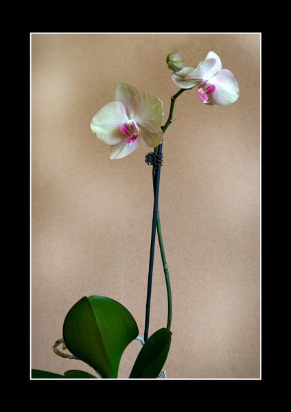 Flower by GaryBooth
