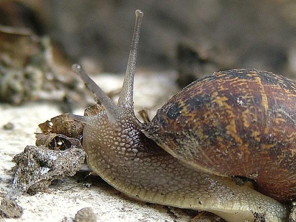snail 2 by Emmybear