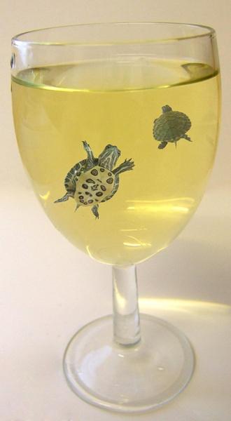 turtles in wine by LaurenWoodhall