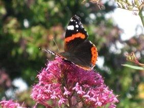 Butterfly by Blinkybaz