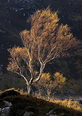 sun lit tree by john thompson