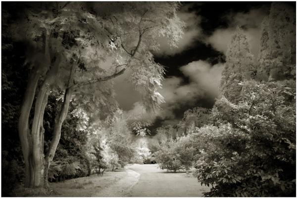 Batsford Arboretum by stevenb