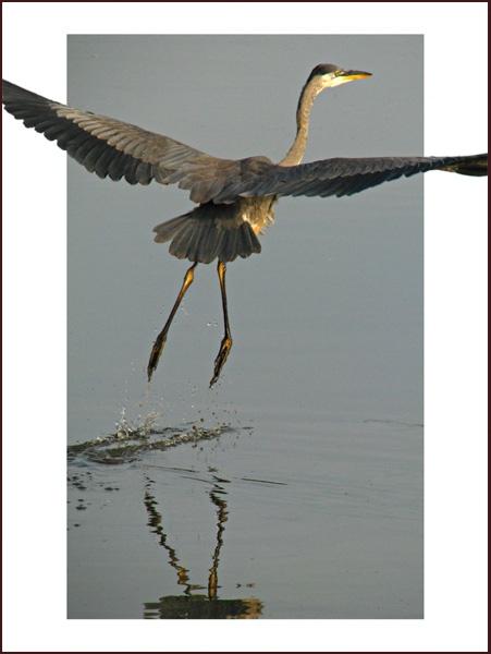 Taking Flight by mikears