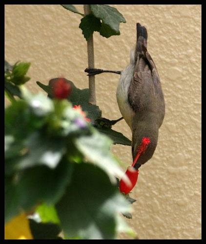 Nectar by magnus
