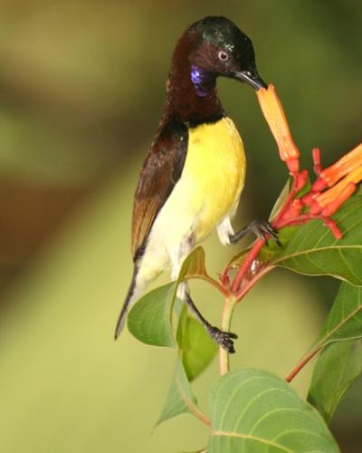 Bird by Desh_M