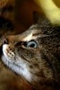 A Feline Model