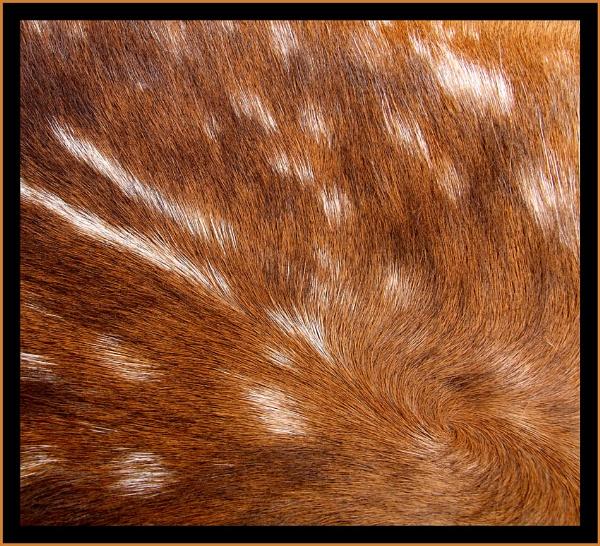 Deer Detail by pamelajean