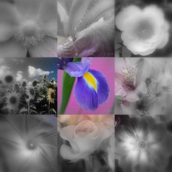 Spot of Color by FlutrByShutrBy