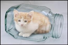 Bottled Kitten