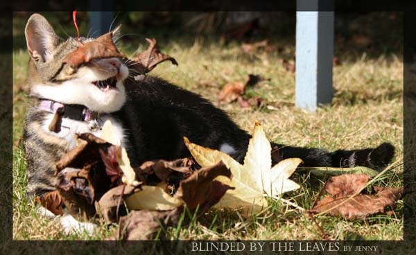 Blinded by the leaves by doctorbee