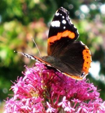 Butterfly after by Blinkybaz