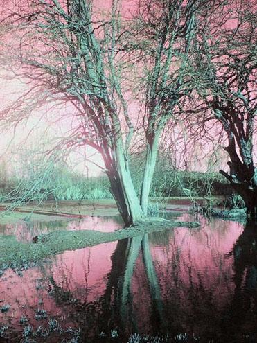 Tree by bracken_donna