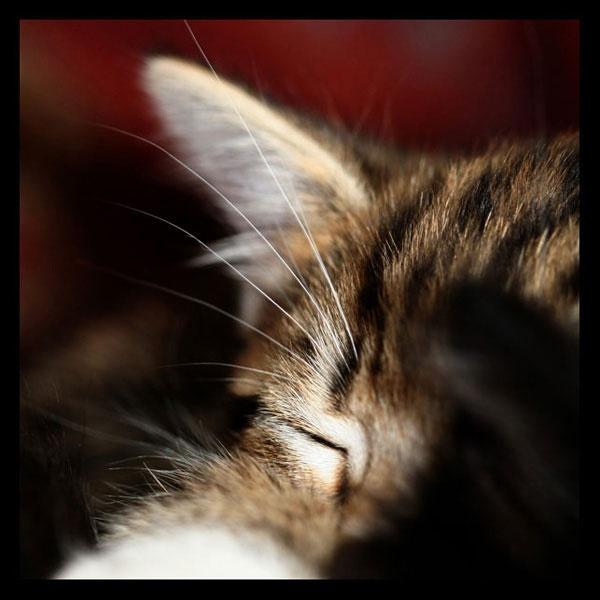 Sleepy Head by SUSIE_SUE