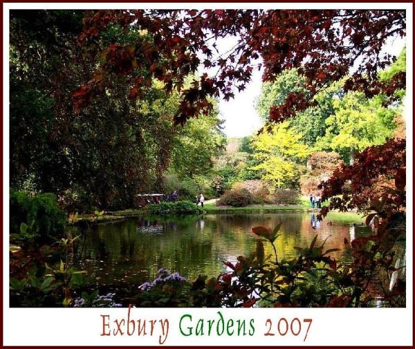 Garden of Colour by daringdaphne