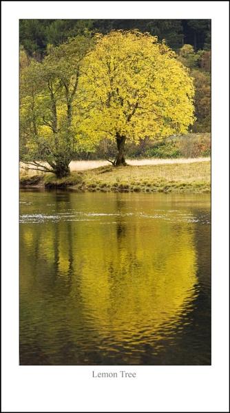 Lemon Tree... by Scottishlandscapes