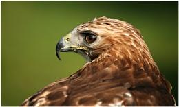 Not A Falcon