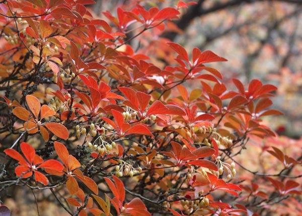 Autumn Colours by albyn