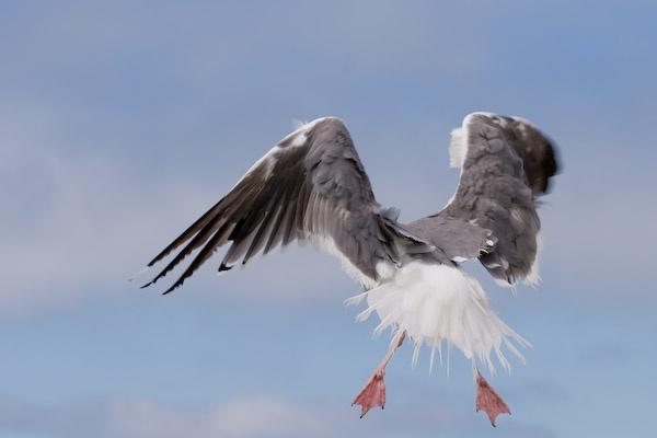 Take off by dimkaz25