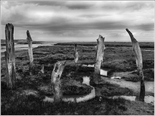 Thornham Stumps by Bellie