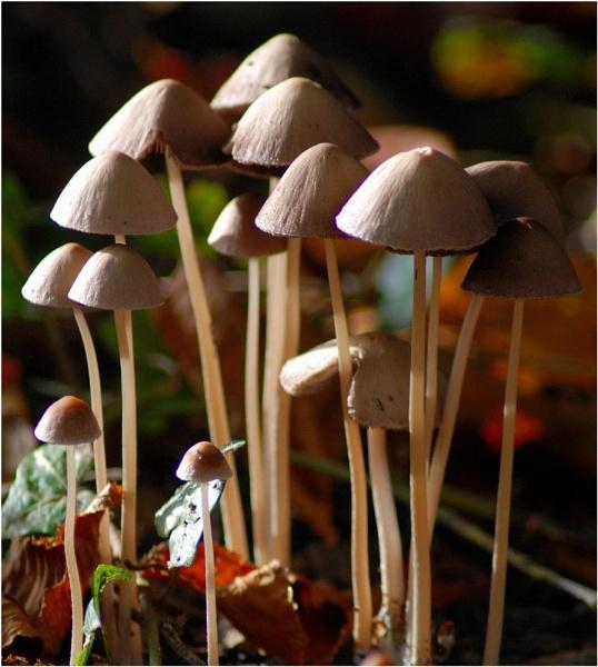 Fungi Forest by Kwosimodo