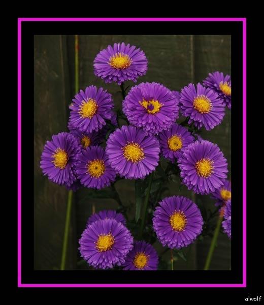 Deep Purple by akw