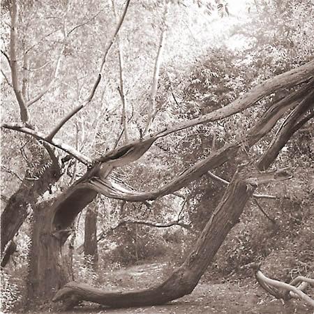 storm damaged  tree by jwc66uk