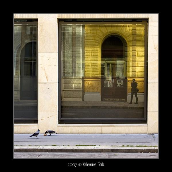 3 pigeons by vtoth
