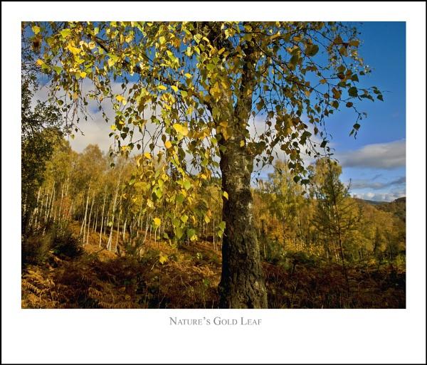 Nature\'s Gold Leaf... by Scottishlandscapes