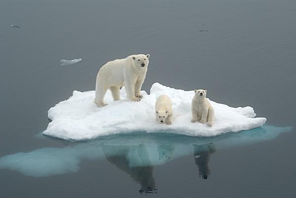 Bye bye bears by Stuarty