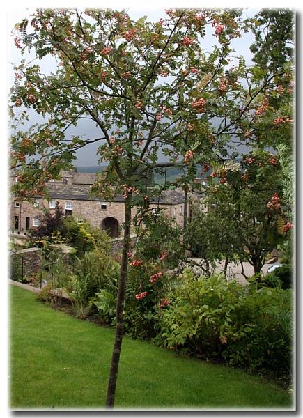 Oh Rowan Tree by AngelaR