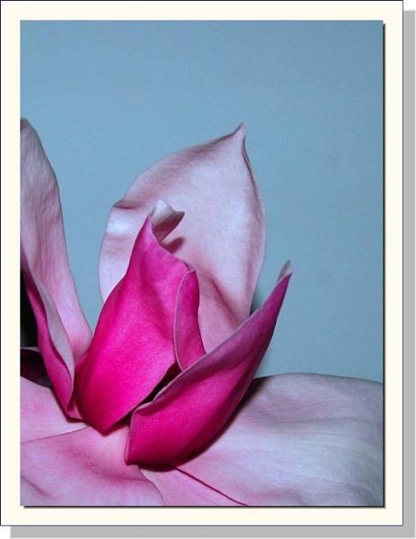 Magnolia 4 Aida by Skye24Blue