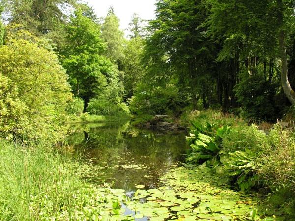 Our Garden I Wish by NeilSchofield