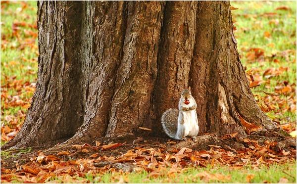 Squirrel\'s unpaid work. by Richardtyrrelllandscapes