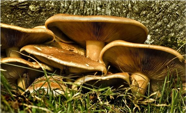 Fungi,01 by Richardtyrrelllandscapes