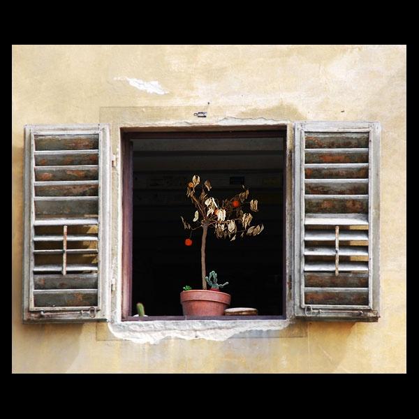 Window drought by Strobe