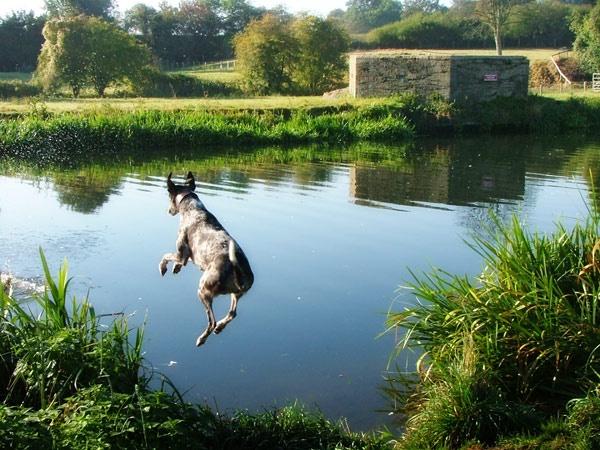 leap by rachepix