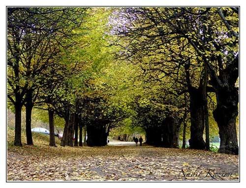 Path by logari
