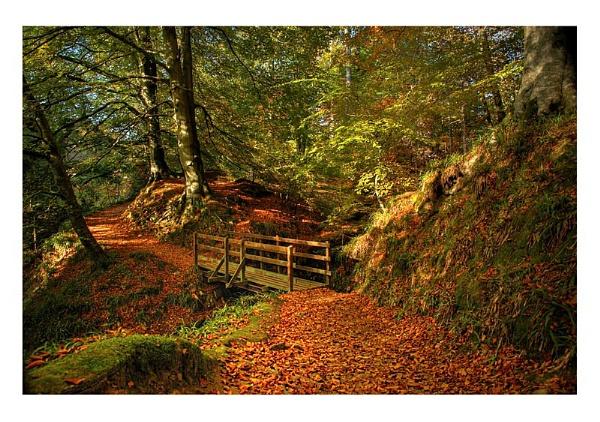Autumn Wood+Bridge by xinia