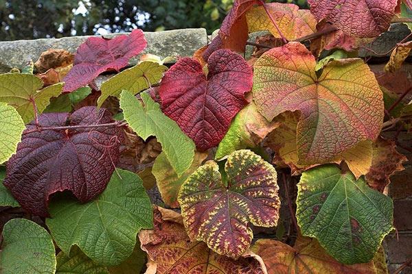 Autumn colours by wbk666