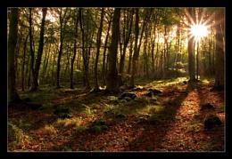 Blairadam Woods III