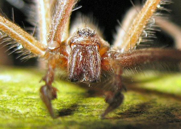 Spider by terra
