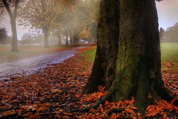 Autumn morning by Strobekid