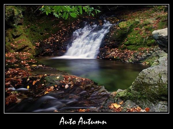 Auto Autumn