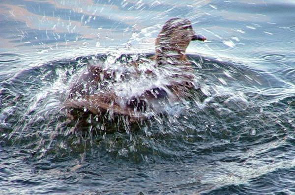 Duck wash by audi_db