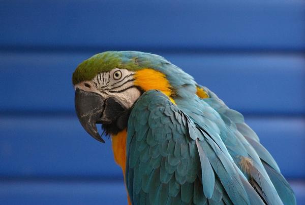 Macaw I by theeyesoftheblind