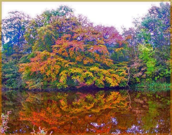 Mill Pond by graceland