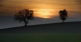 2 tree hill