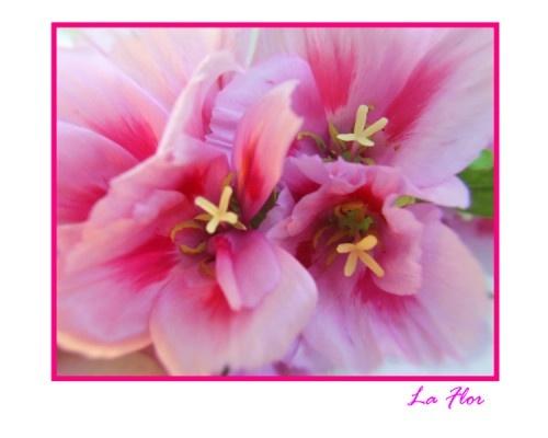 la flor by romelyanielsharon