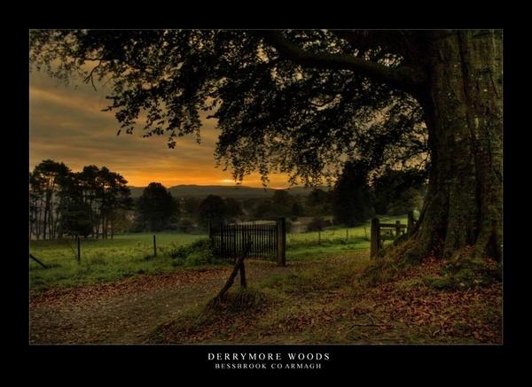 Woodland Sunrise by maytownme