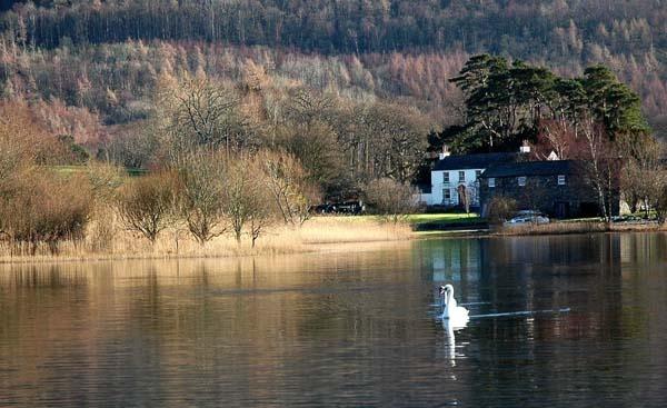 swan lake by Cormy